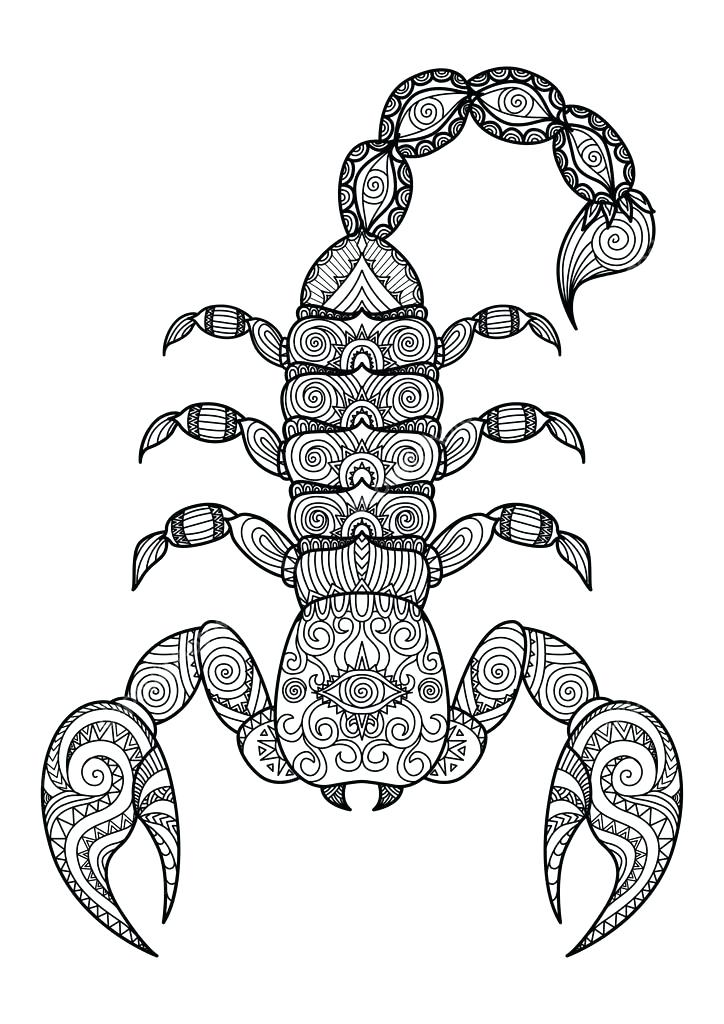 724x1024 Scorpion Coloring Printable Drawings And Coloring Pages Scorpion