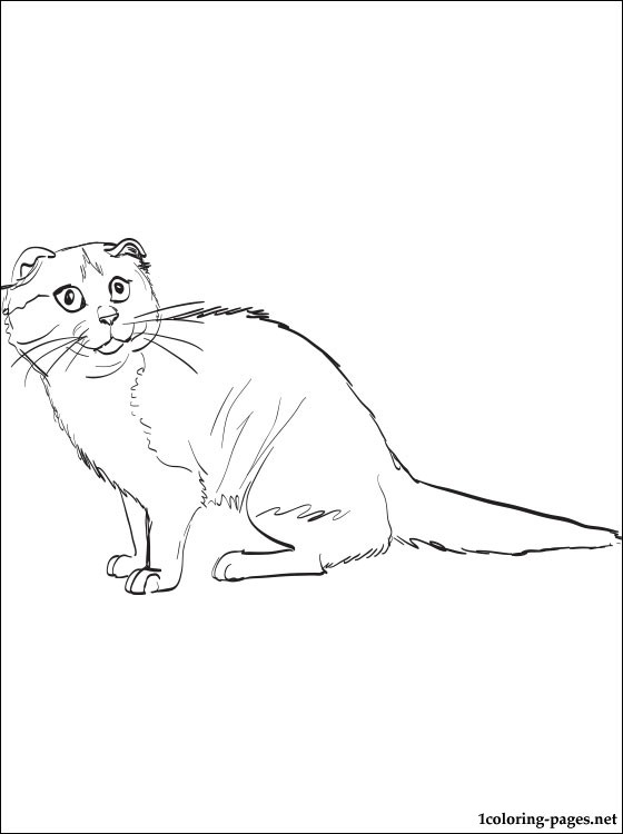 560x750 Scottish Fold Coloring Page Coloring Pages