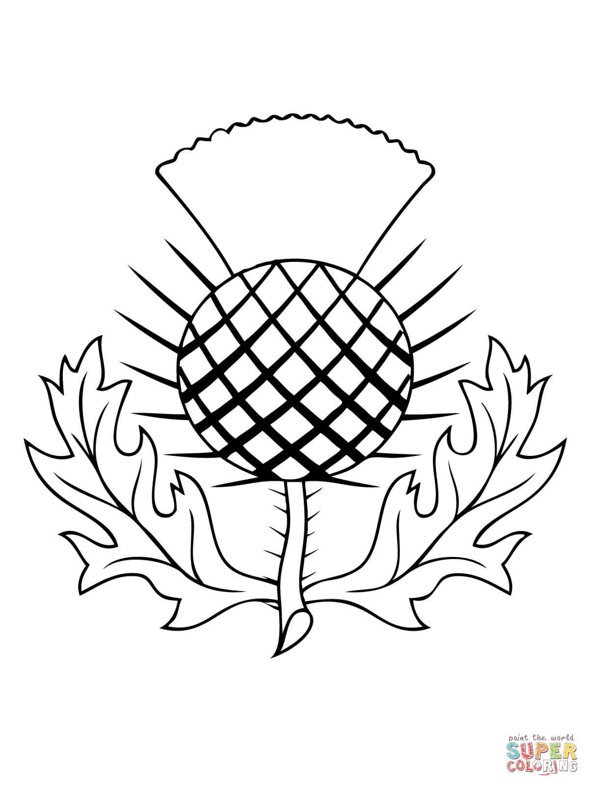 1200x1600 The Thistle Of Scotland Coloring Page Free Printable Coloring