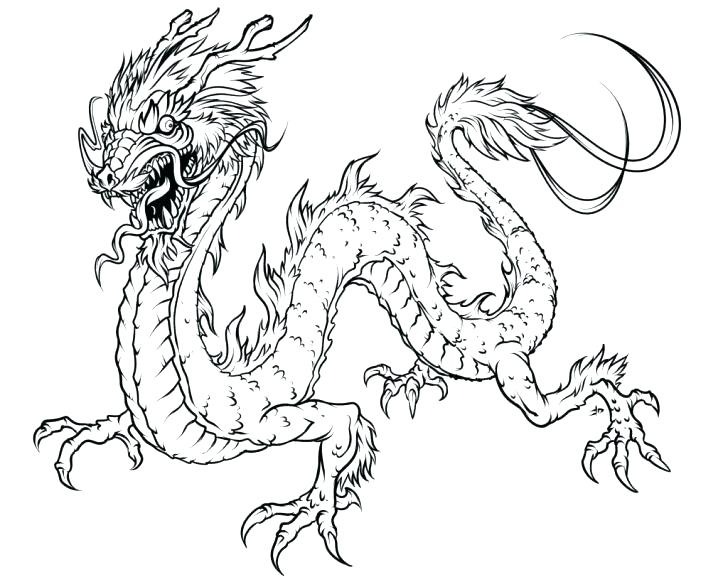 728x582 Realistic Coloring Pages Of Animals Realistic Animal Coloring