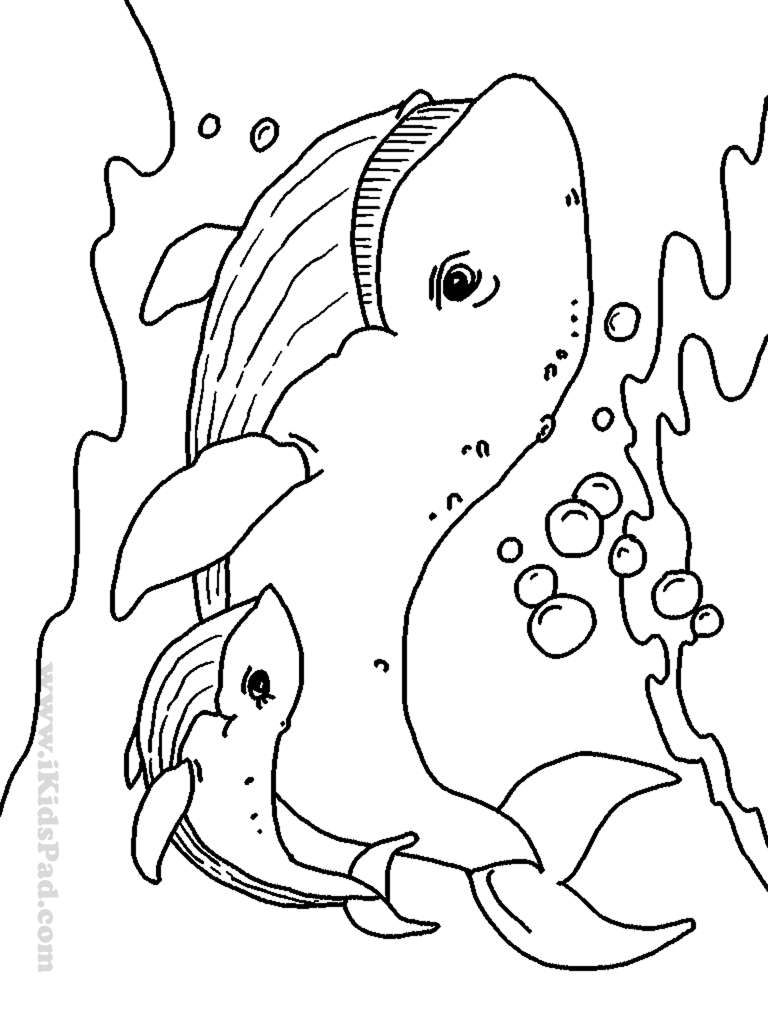 768x1024 Easily Ocean Animal Coloring Pages Top Sea Lif
