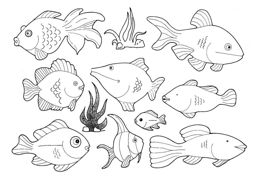 875x595 Sea Animals Coloring Pages