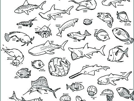 440x330 Sea Animal Coloring Pages Printable Free