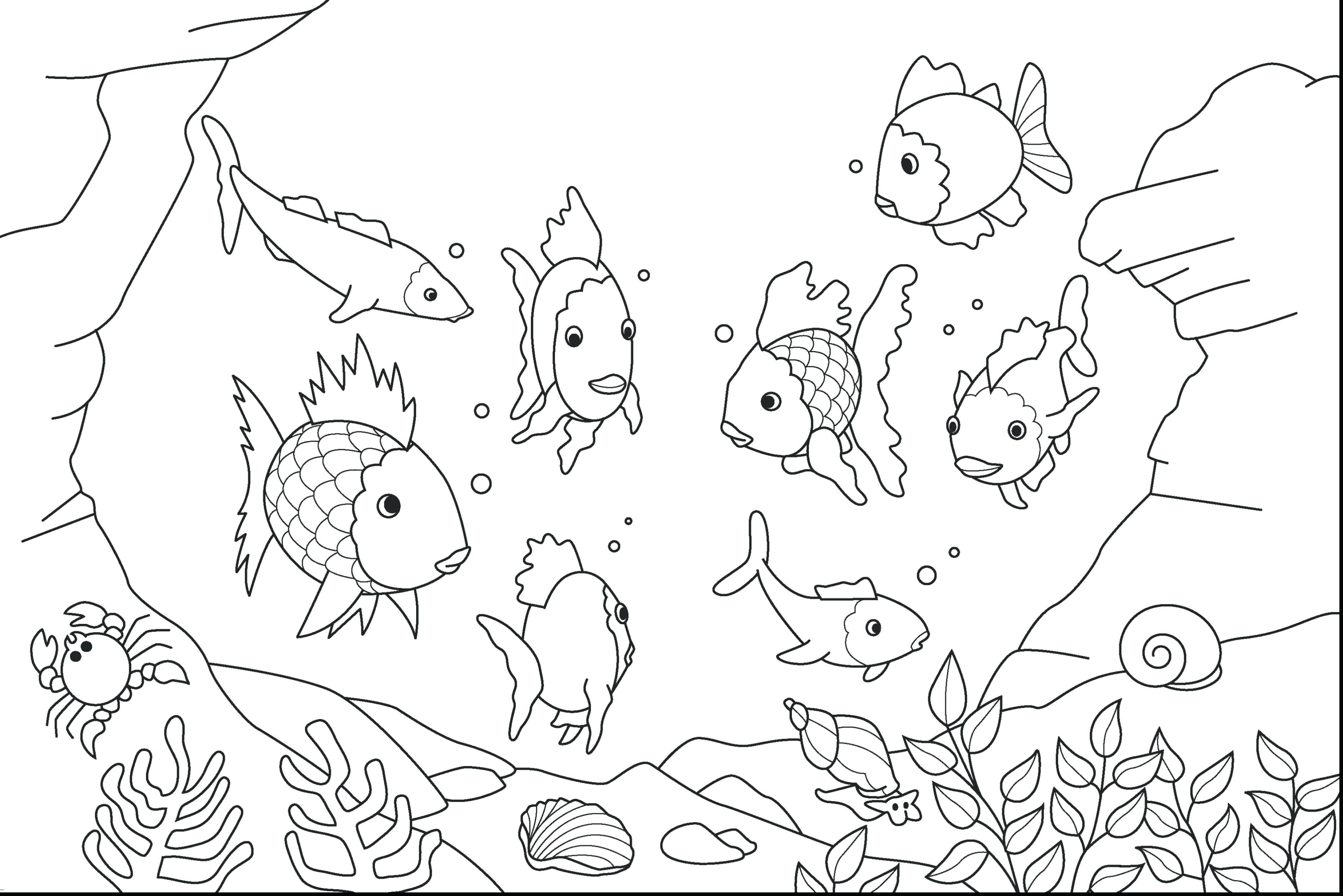 3724x2486 Coloring For Kids Pages Ocean Animals Pdf Free Sheets Sea