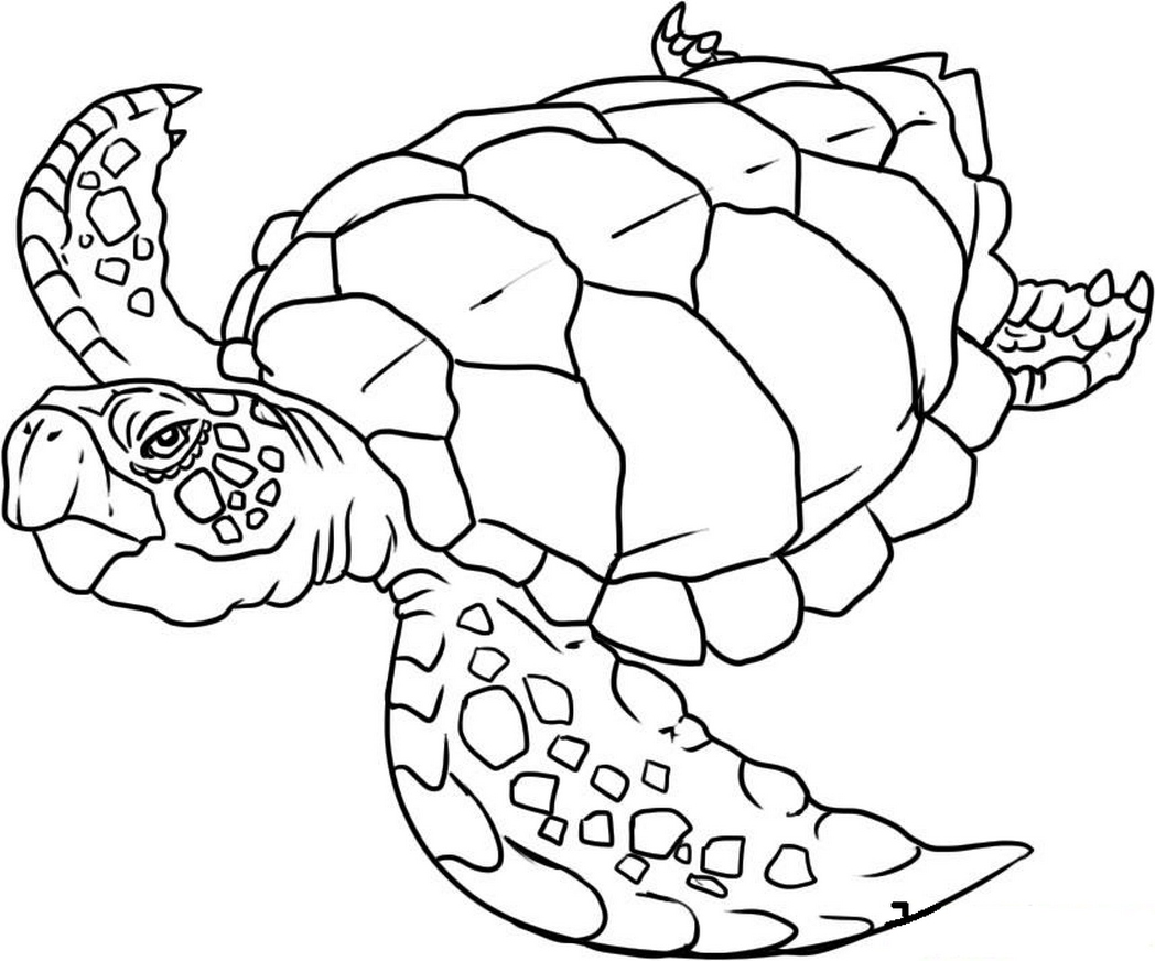 Sea Animals Coloring Pages Free