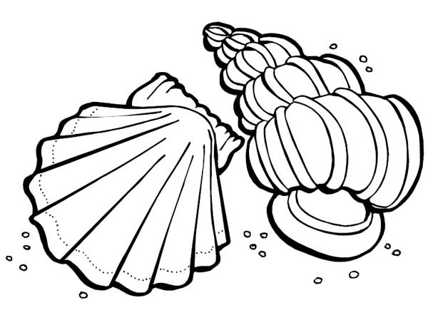 600x442 Two Sea Shells Sea Animals Coloring Page