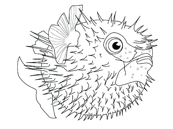 600x450 Animal Coloring Pages Sea Animals Fish Free Page Download Print