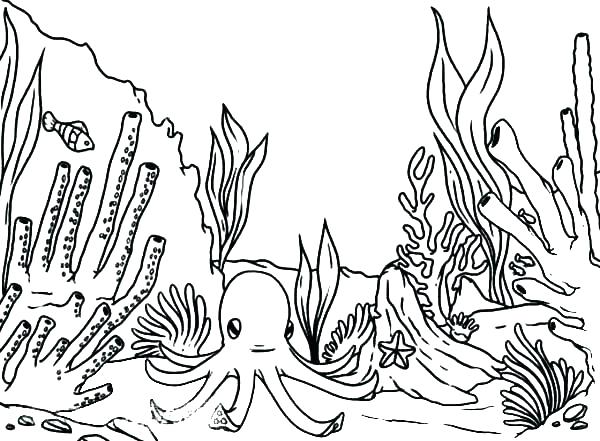 600x441 Coral Reef Coloring Page Coloring Pages Of Coral Reefs Coral