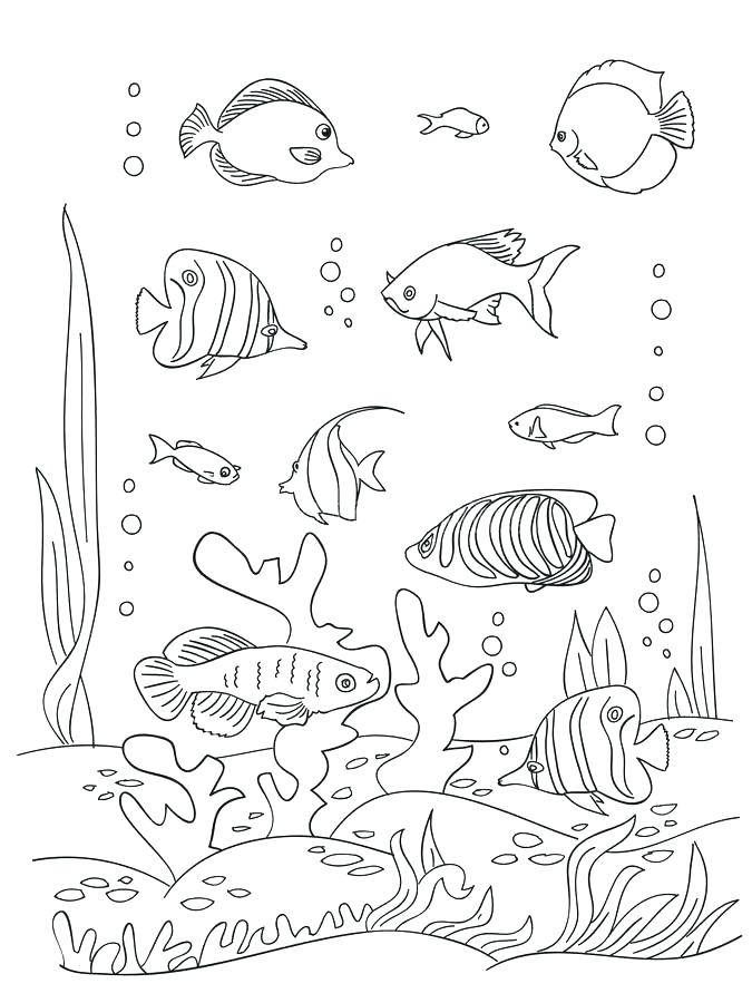 675x900 Seaweed Coloring Pages