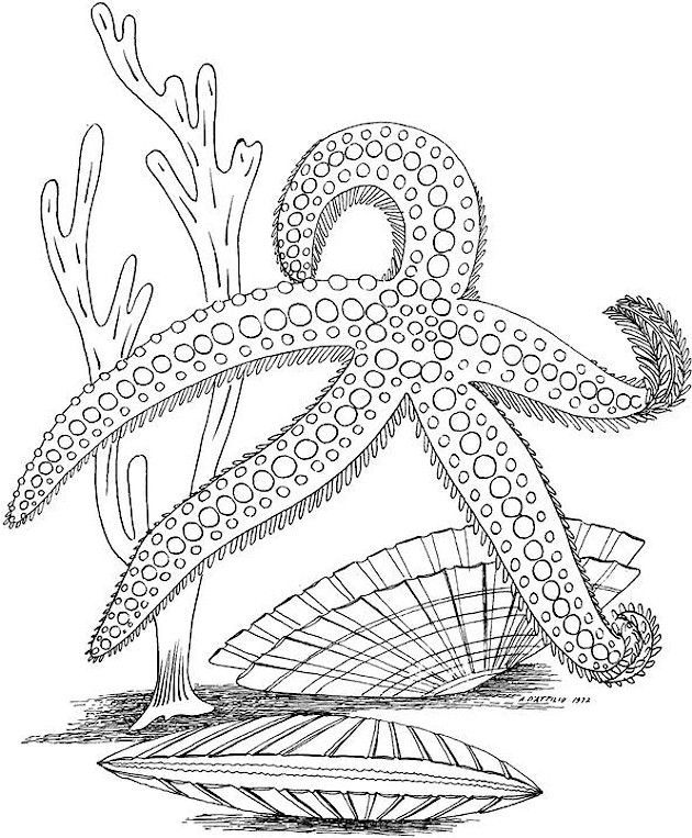 Sea Life Coloring Pages For Adults