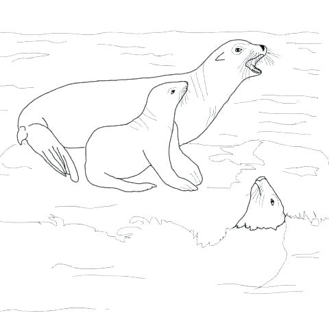 480x469 Sea Lion Coloring Pages Sea Lion Coloring Page Sea Lion With Its