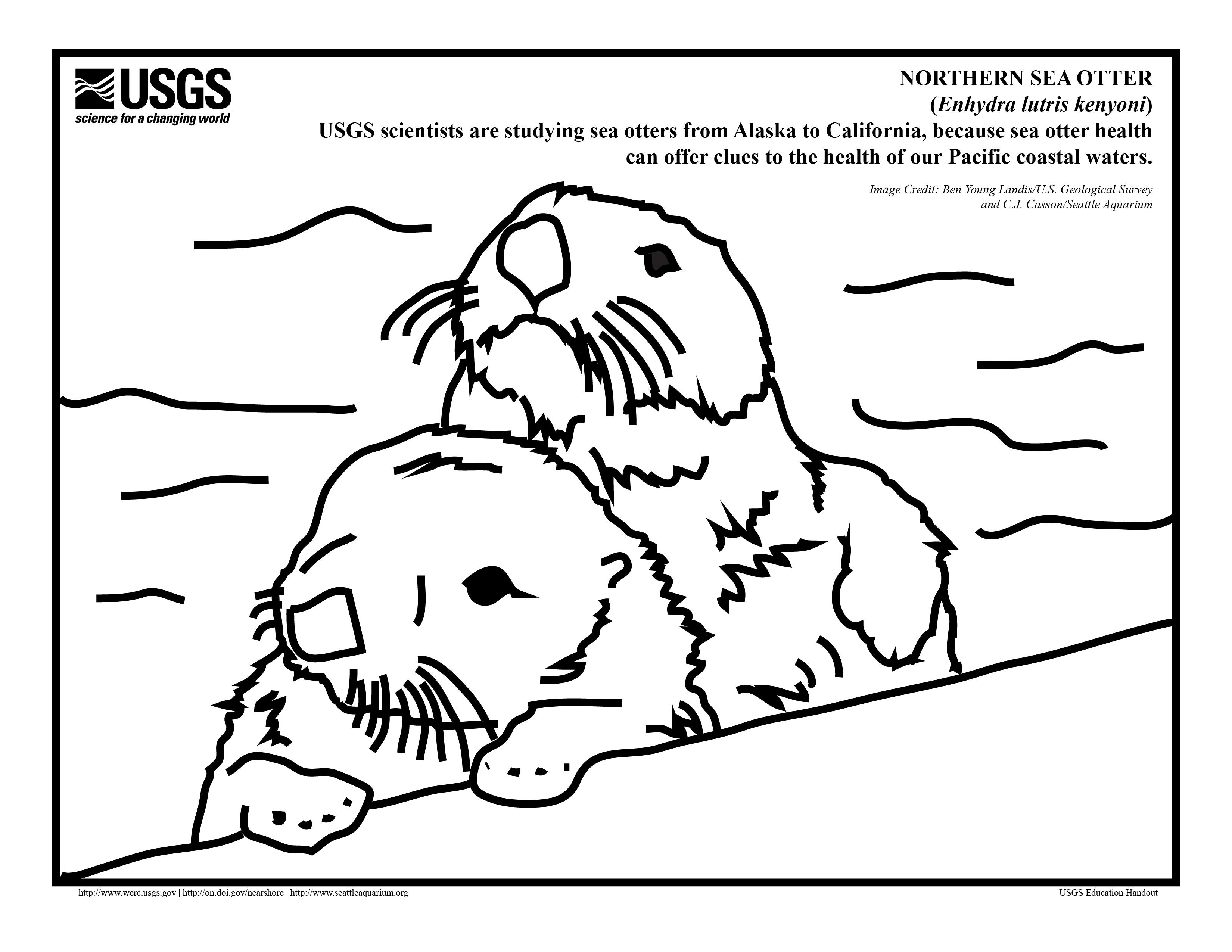 3300x2550 Pleasant Design Otter Coloring Pages Sea Page Pictures Imagixs