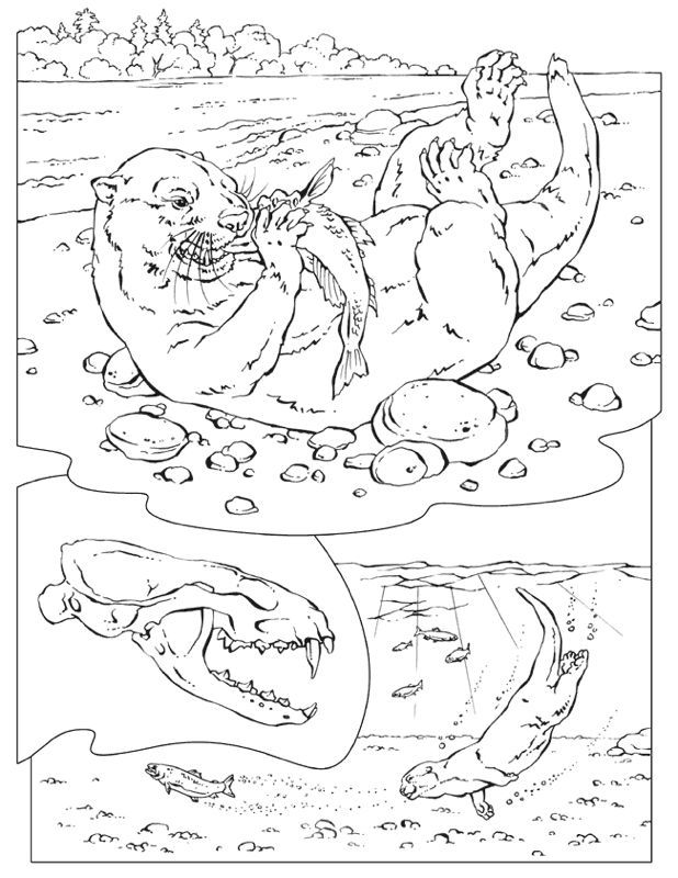 618x800 River Otter Coloring Pages, Sea Otter With A Fish Ink Spots
