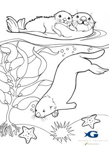 224x299 Sea Otter Awareness Week Otters, Yearbooks And Ocean