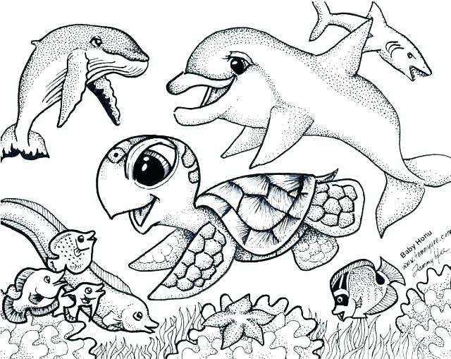 640x509 Sea Otter Coloring Page Free Baby Sea Otter Coloring Page