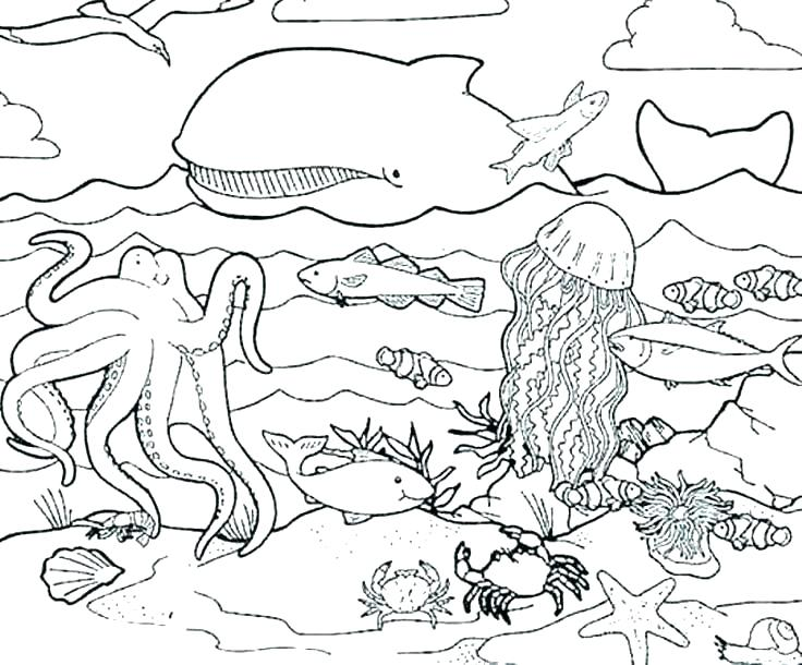 736x610 Sea Otter Coloring Page