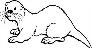 321x169 Free Coloring Pages Of White Otter