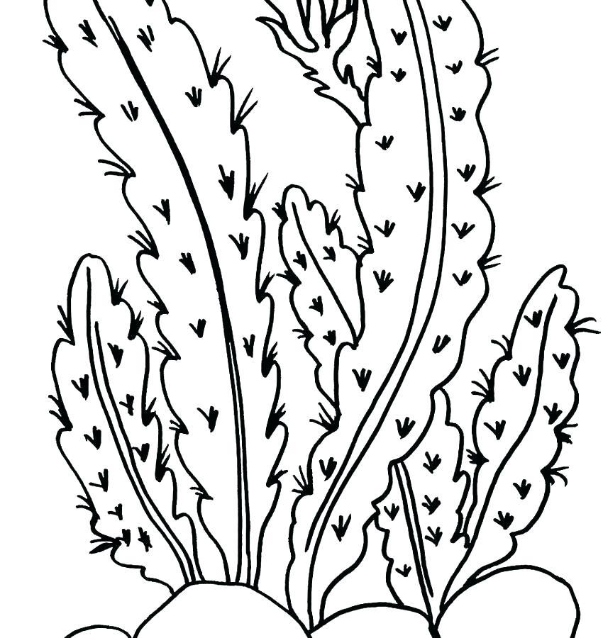 850x900 Plants Coloring Pages Ocean Plants Coloring Pages Plus Ocean