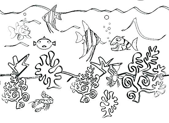 551x400 Coloring Pages Of Ocean Animals Sea Plants Coloring Pages Ocean