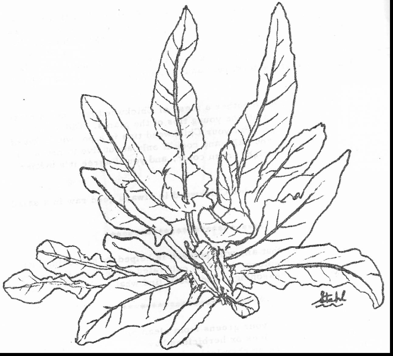 1292x1169 Great Ocean Plants Coloring Pages With Plant Throughout Sea Plants