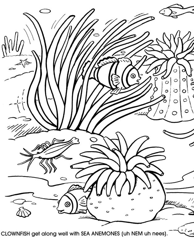 628x770 Great Barrier Reef Coloring Pages