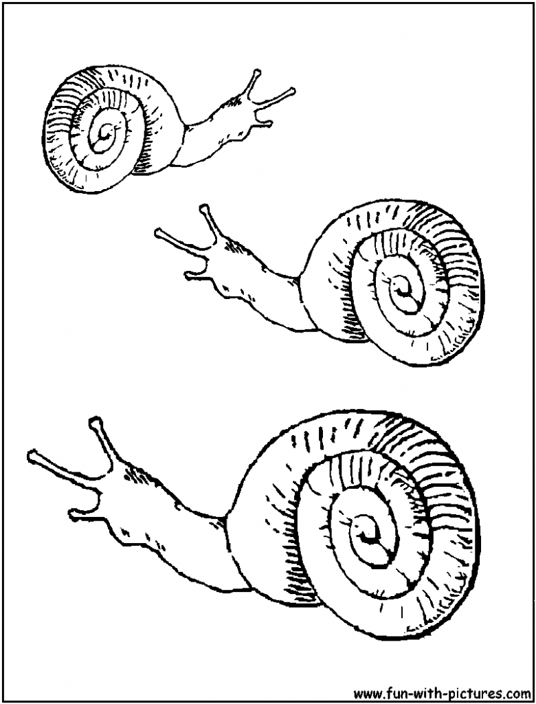 780x1024 Sea Snail Coloring Pages