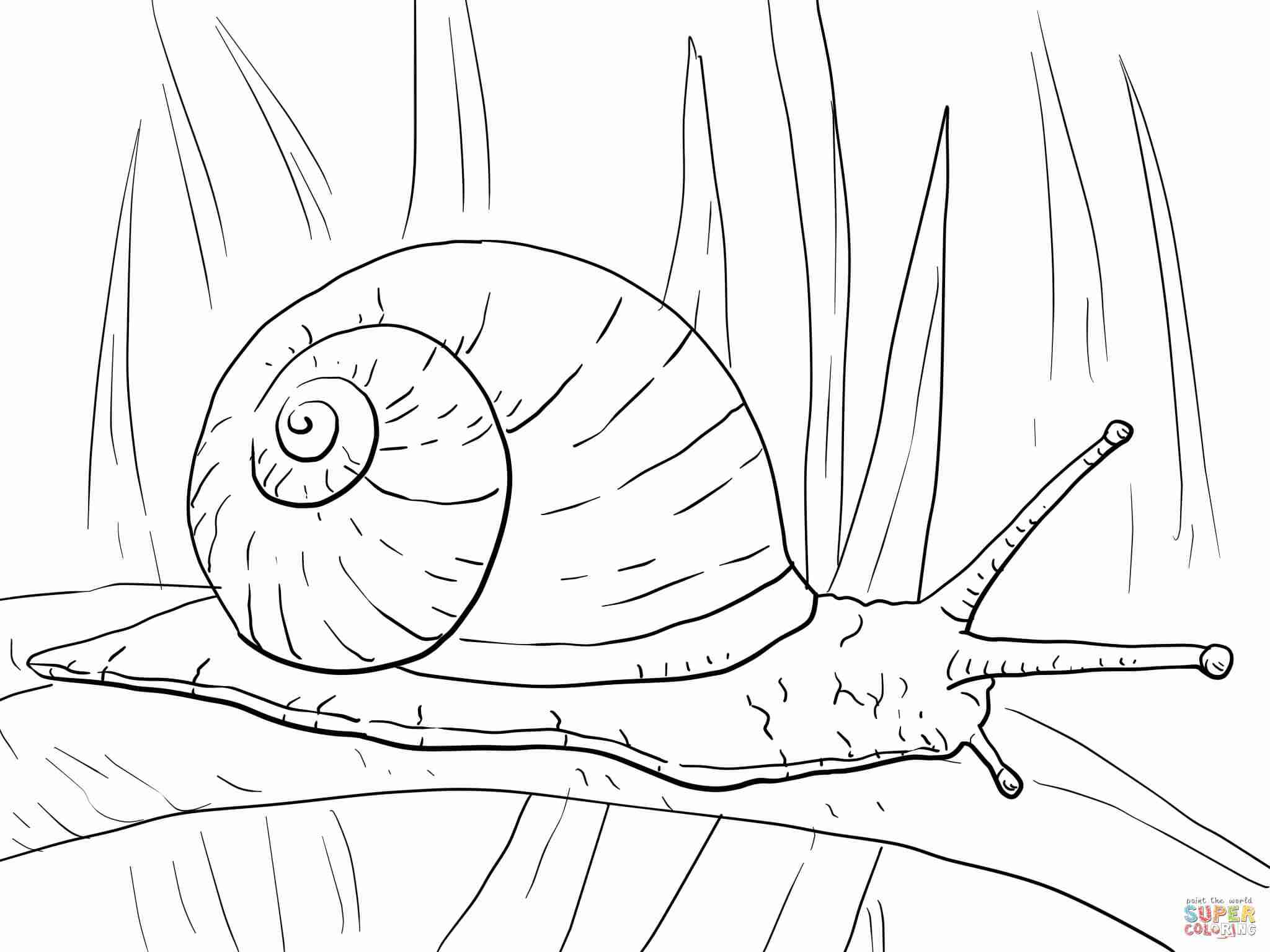 2048x1536 Sea Snail Drawing At Getdrawings Com Free For Personal Use