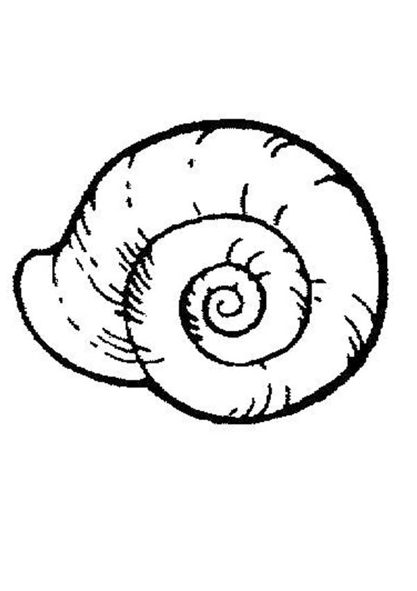600x849 Sea Snail Free Coloring Page