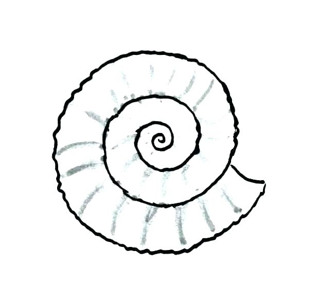 618x600 Seashell Coloring Page Seashells Coloring Page Seashell Pages