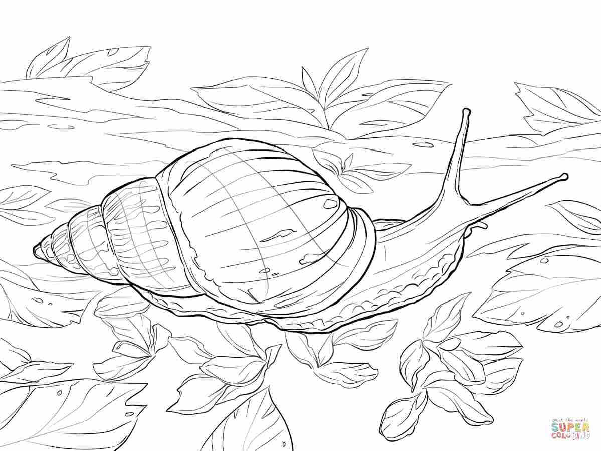 1199x899 Cute Snail Coloring Pages Printable Free Animals Page Cone Sea