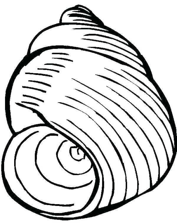 600x756 Excellent Snail Coloring Pages Sea Animal Pictures To Color Nutmeg