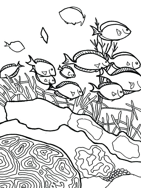 600x796 Coral Coloring Pages Coral Reef Fish School Of Coral Reef Fish