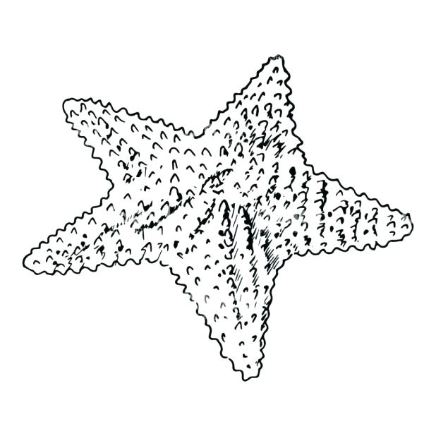 618x618 Starfish And Seaweed Coloring Pages Printable Patrick Star