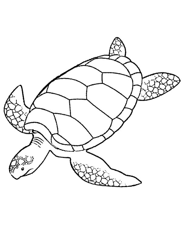 600x763 Giant Green Sea Turtle Coloring Page Giant Green Sea Turtle