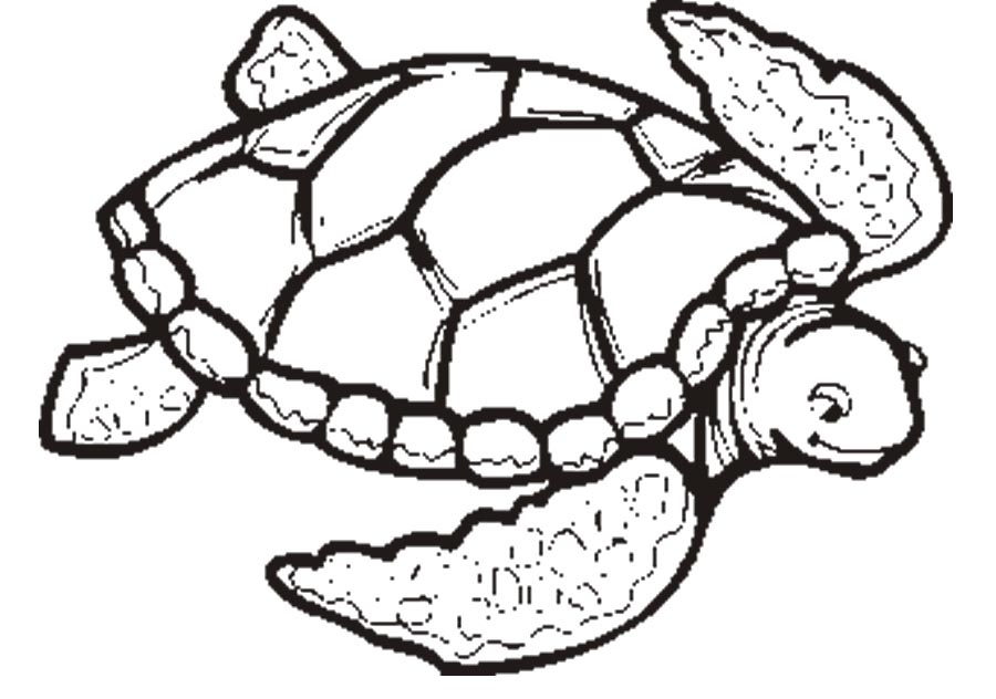 900x632 Grand Sea Turtle Coloring Pagesdult Baby Printable