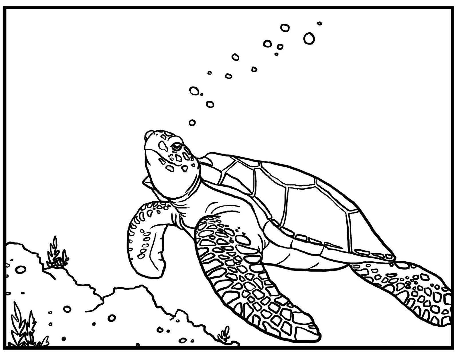 1600x1236 Sea Turtle Coloring Page Free Bell Rehwoldt To Print