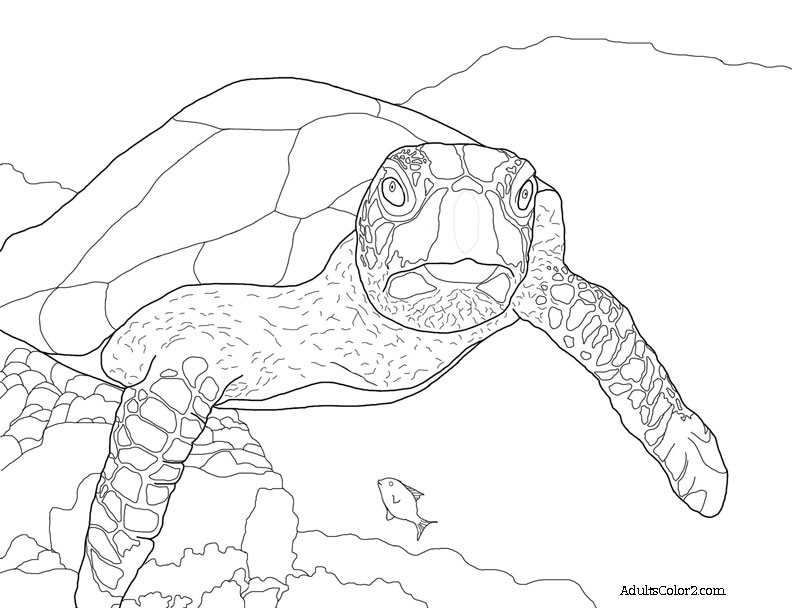 792x608 Sea Turtle Coloring Page Help Hawksbills