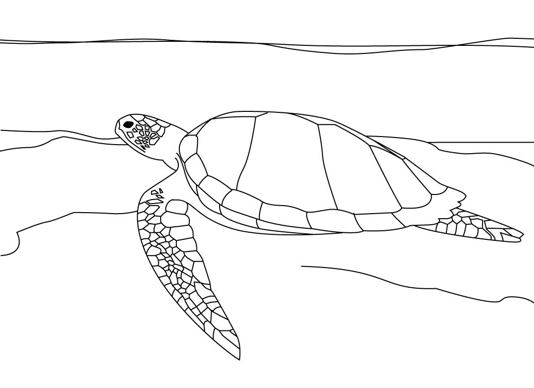 1060x770 Sea Turtle Coloring Page Montenegroplaze Me Incredible Realistic