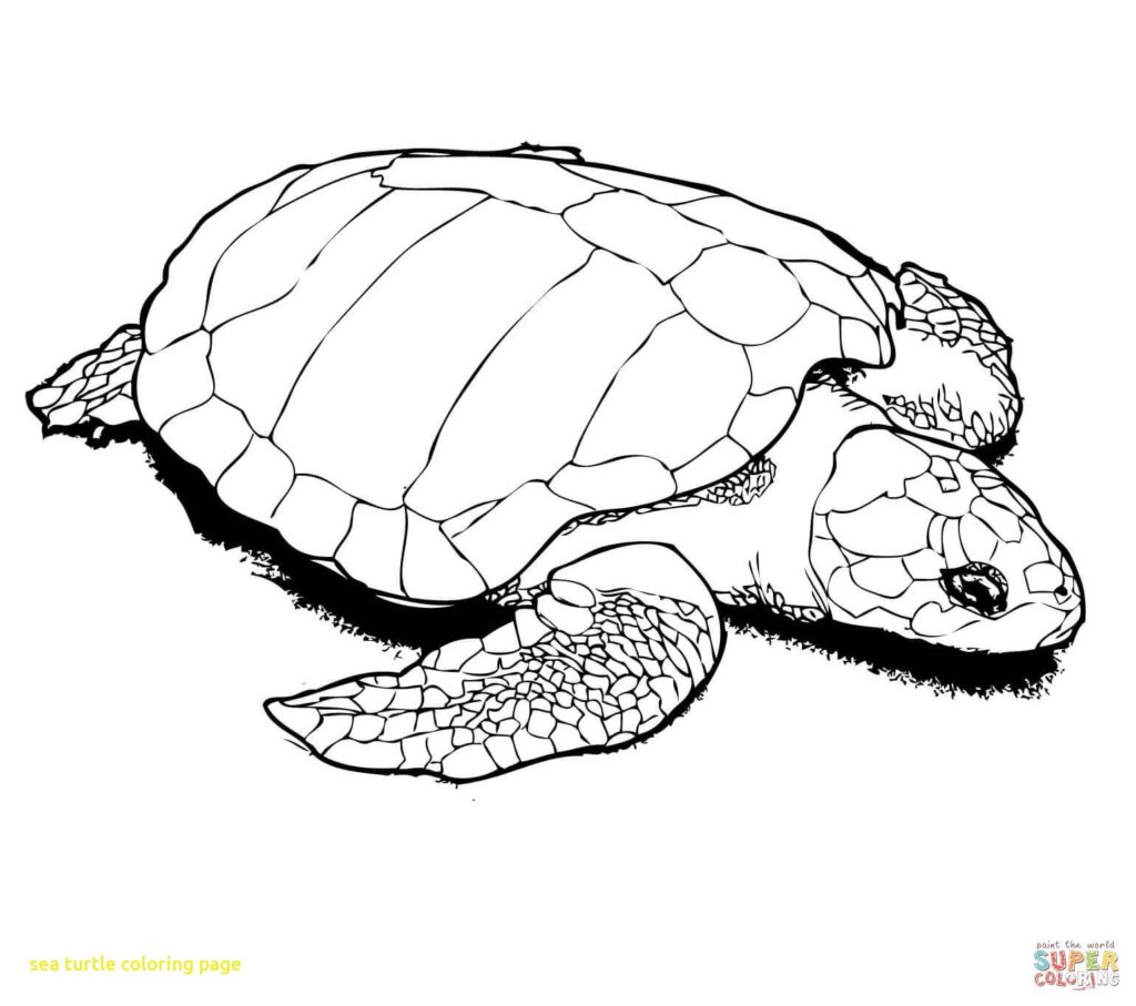 1024x907 Sea Turtle Coloring Pages Page With Books Turtles Get Bubbles