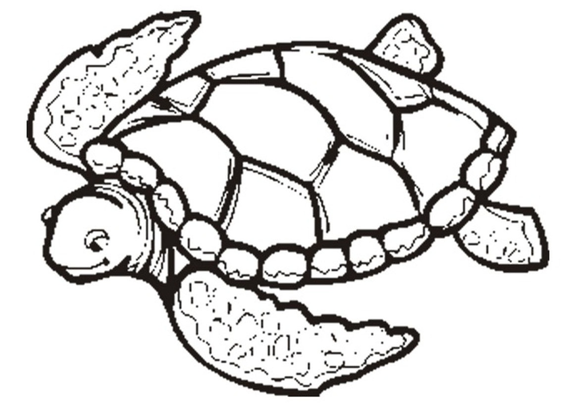 1169x826 Sea Turtle Coloring Pages Printable