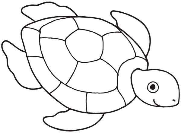 600x441 Sea Turtle Drawing Free Coloring Page