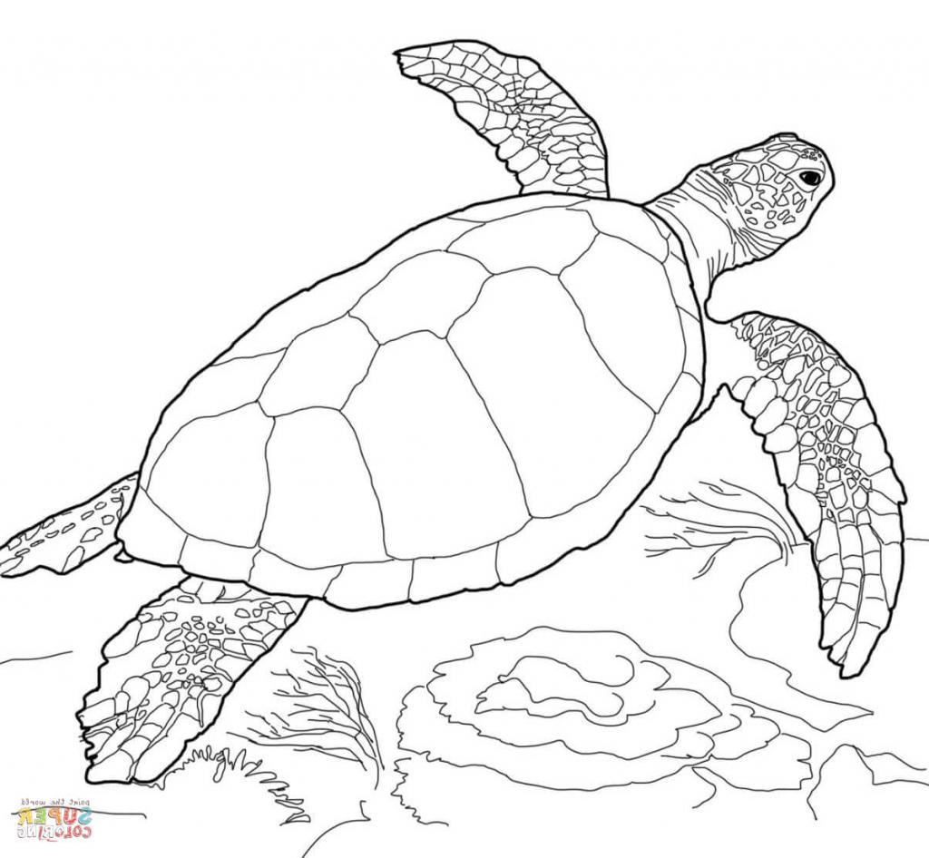 1024x946 Simple Sea Turtle Drawing Simple Sea Turtle Drawing Sea Turtle