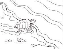 220x170 Coloring Pages Sea Turtles And The Quest To Nest Waterlife