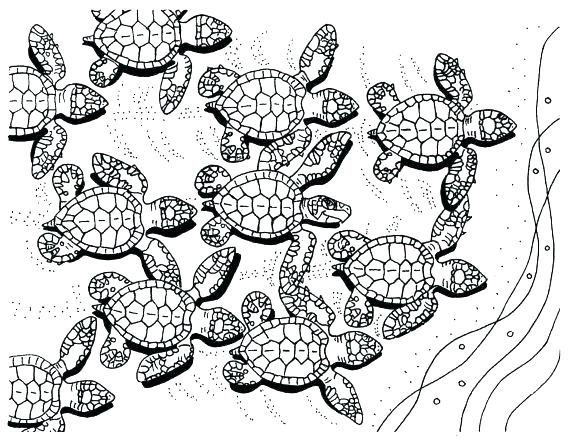 570x440 Turtle Coloring Pages Cute Turtle Coloring Pages Coloring Pages