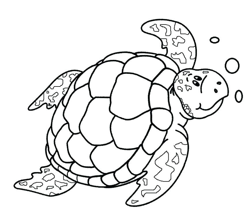 850x770 Coloring Pages Turtle Printable Turtle Coloring Pages Sea Turtle