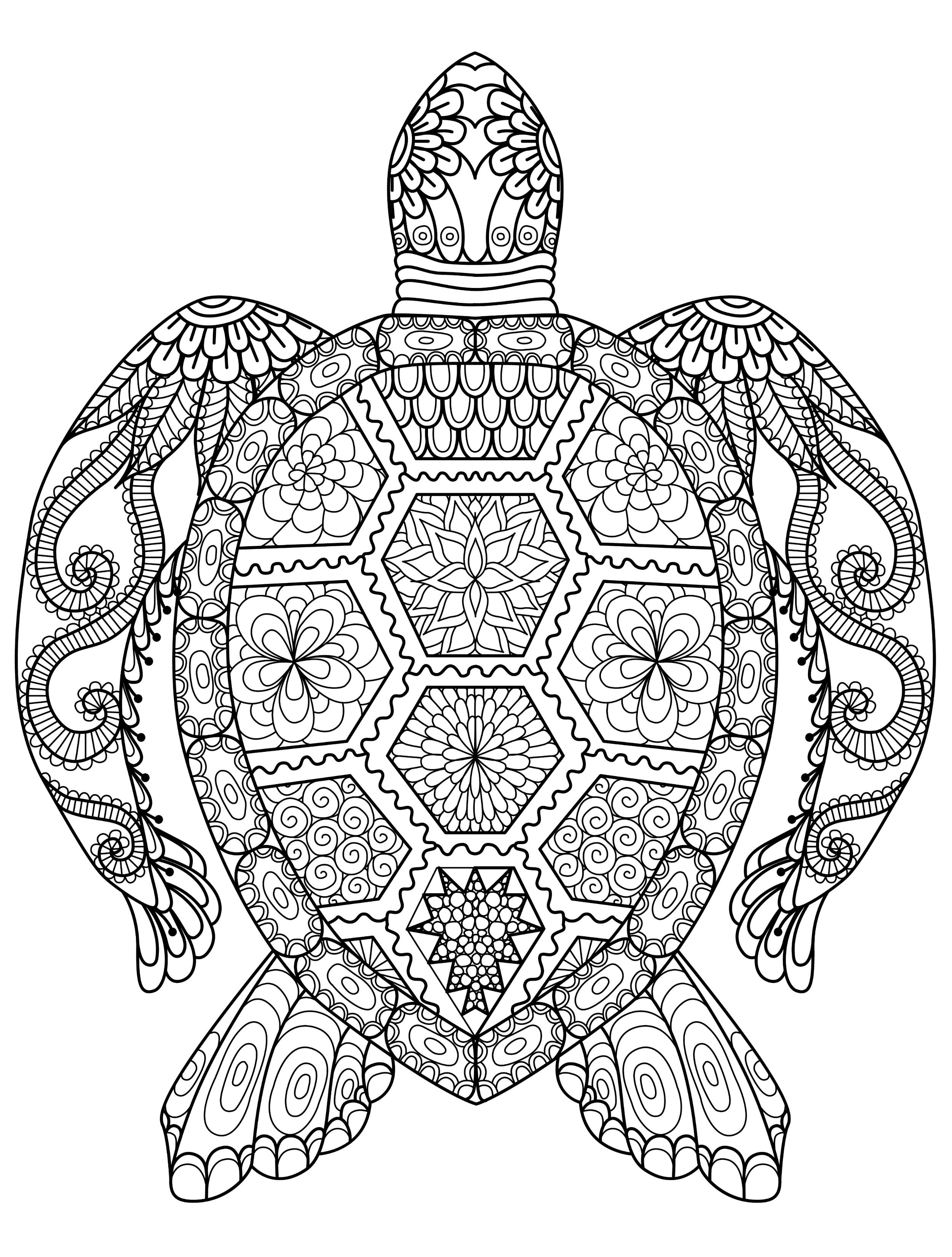Sea Turtle Coloring Pages For Adults