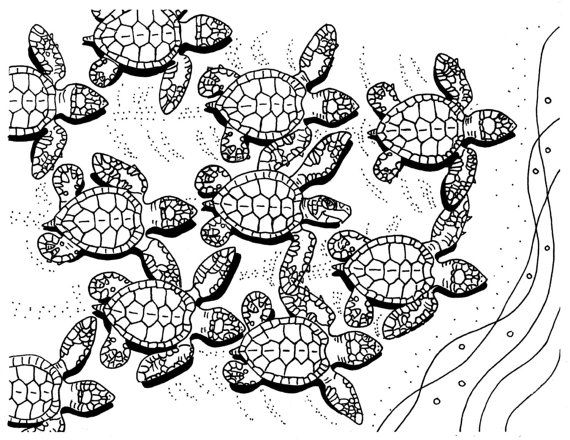 Free Printable Coloring Pages For Kids And Adults: Printable Sea Turtle  Coloring Pages For Adults