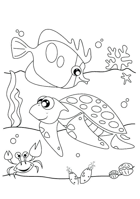 595x842 Sea Urchin Coloring Page Sea Urchin Coloring Page Sea Urchin Black