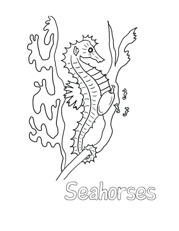612x792 Sea Horse Coloring Pages Seahorse Coloring Pages For Kids Seahorse
