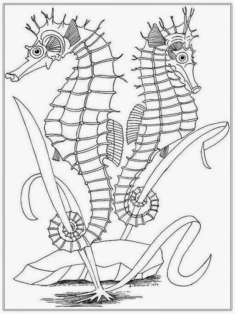 Seahorse Coloring Pages For Kids At Getdrawings Free Download
